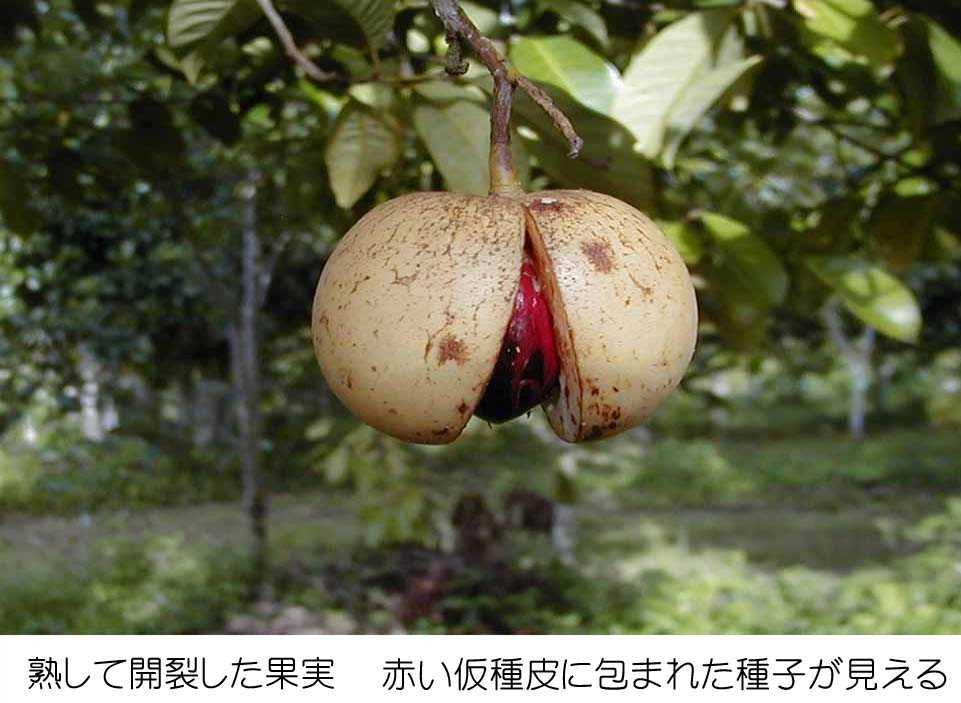 難読漢字 野菜・魚・植物・動物・果物 ...